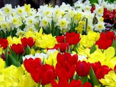новости казань татарстан восьмое марта
